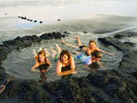 Hawaii Shore Tours And Cruise Excursions